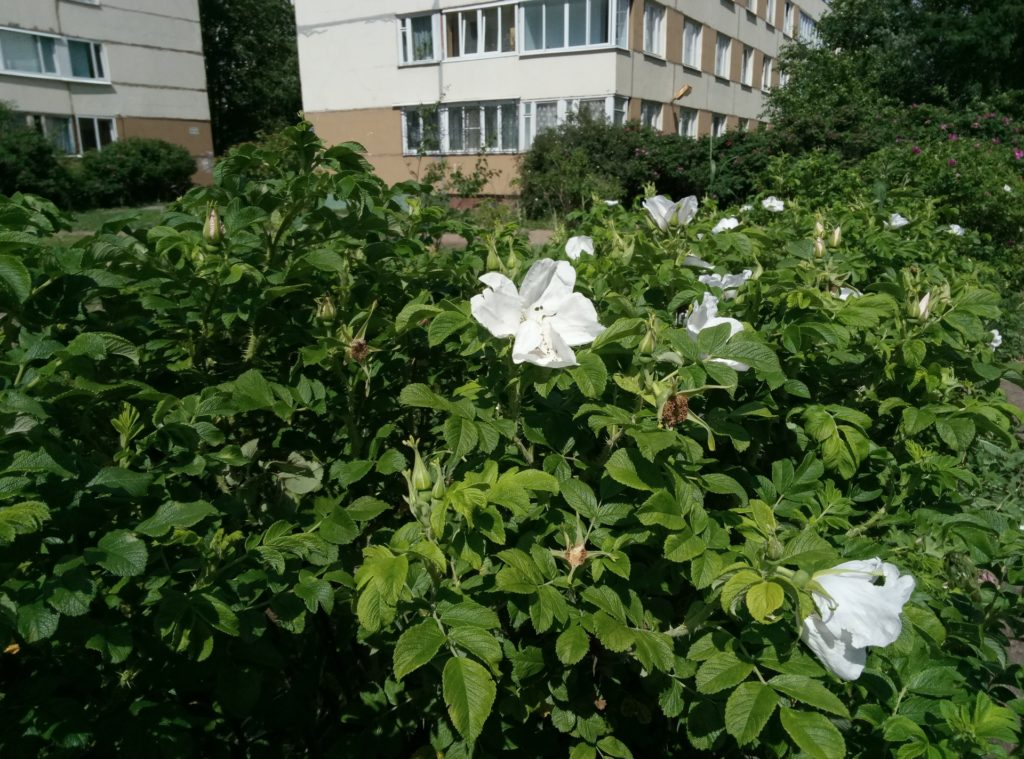 Meizu M3 Note Review - Test photo 09